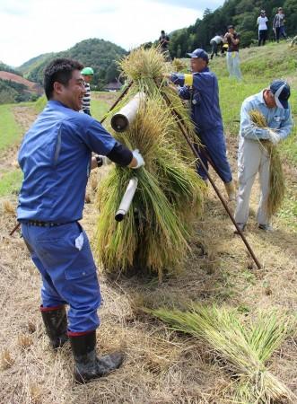 刈った稲を藁で結び、稲木に干します。最近はあまり見なくなった稲木干し。風情を感じます(^^)