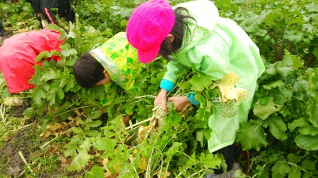 収穫を楽しむ子どもたち