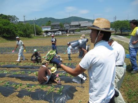 サツマイモの植え方を指導中