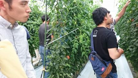 トマトを栽培する盟友のハウス圃場を視察しました。