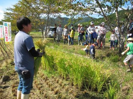 西山副部長から稲刈りの指導を受けました