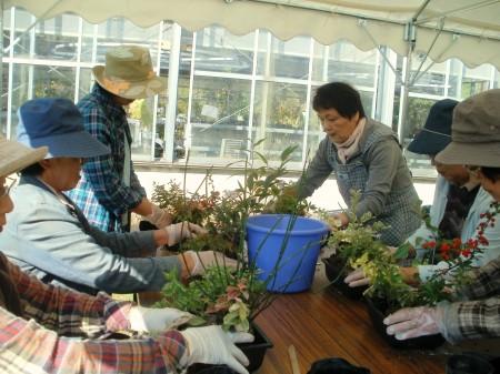 もみじ・ヤマアジサイ・ホトトギスなどの山野草を使ってこけ玉・寄せ植えを作りました。