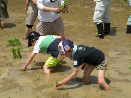 初めての田植えで、足をとられながら 頑張りました^_^V