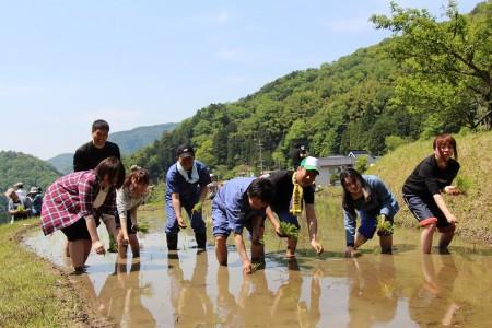 みんなで田植え。コシヒカリと酒米を手で植ました(^o^)