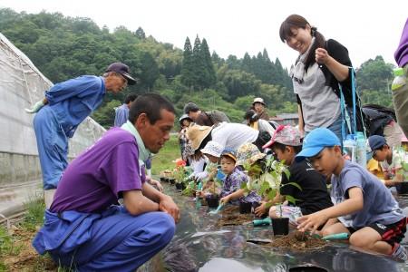 青壮年部員の指導で、管内の特産品「万願寺甘とう」の 苗を植えました!^_^!