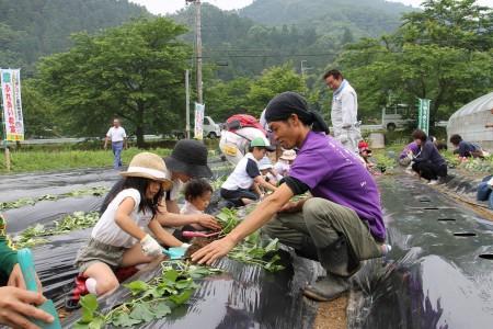 サツマイモ堀りはしたことあるけど、 苗を植えるのは初めてだという子どもも多かったです!
