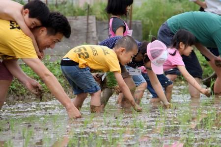 昼からは、泥んこになりながら田植えをしました。 大変な作業でしたが、最後まで頑張りましたよ~★