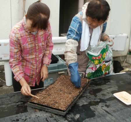 仕上げは、薄く土を被せて出来上がり (^_^)/~