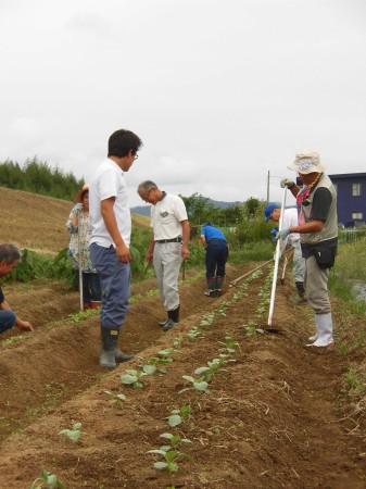 ダイコン・カブの畑の除草作業も行いました。 みんなで協力すると作業も早いです^_^V
