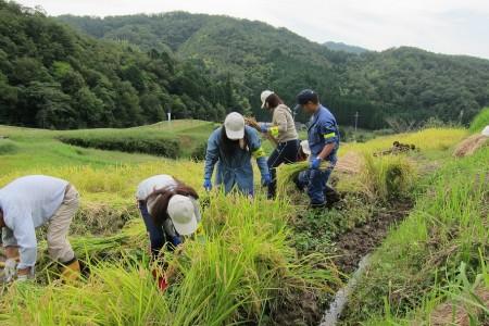 一般の参加者と一緒に稲刈り(^_^)