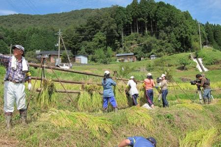 稲木にかけていきます。結構重労働(^_^;) 昔の人たちはすごいなぁ・・。