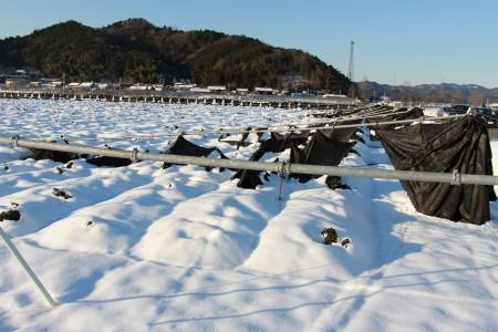 積雪で倒壊した茶棚(綾部市)