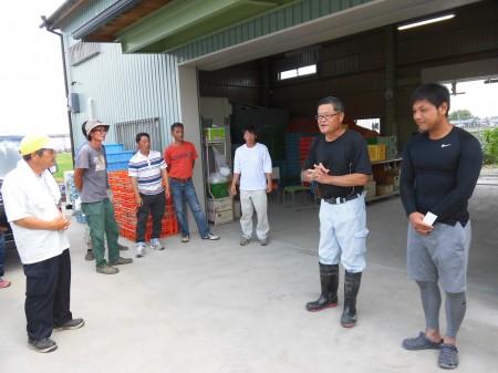 北川さん親子は、ナスの他に九条ネギも栽培されています。