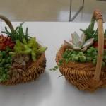 フレッシュミズ・カレッジ『多肉植物の寄せ植え』教室を開催