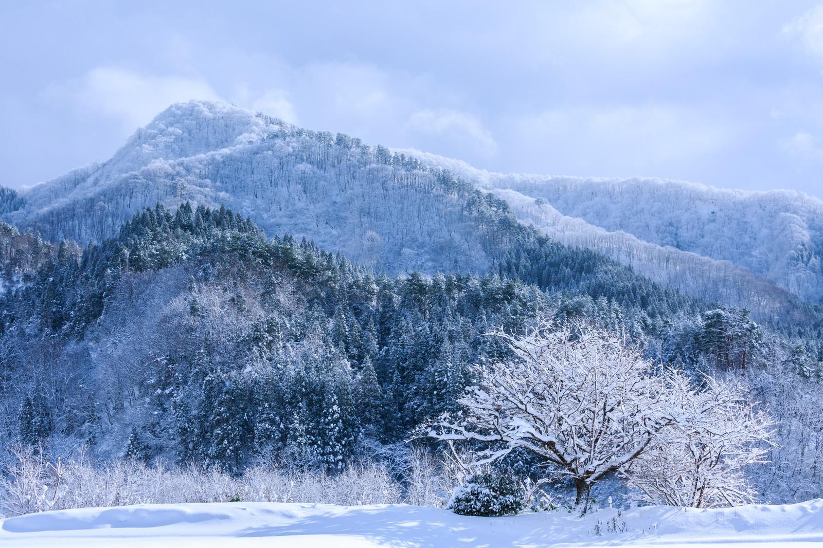 大雪及び低温による被害防止対策(普及センターより)