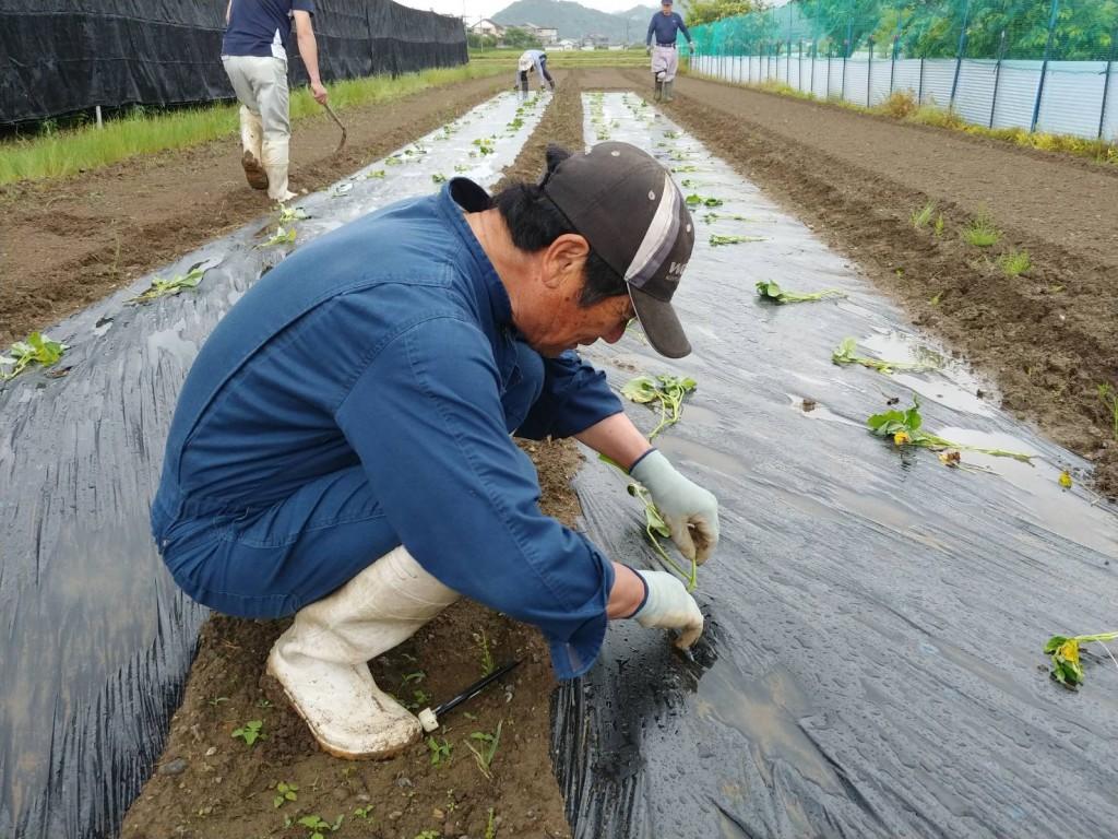 【京都・にのくに】野菜づくりで地域を活性化/200526